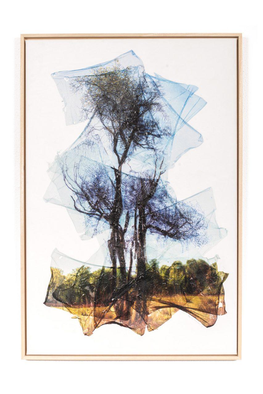 Juvenile Deviation 2017 60 x 90 cm