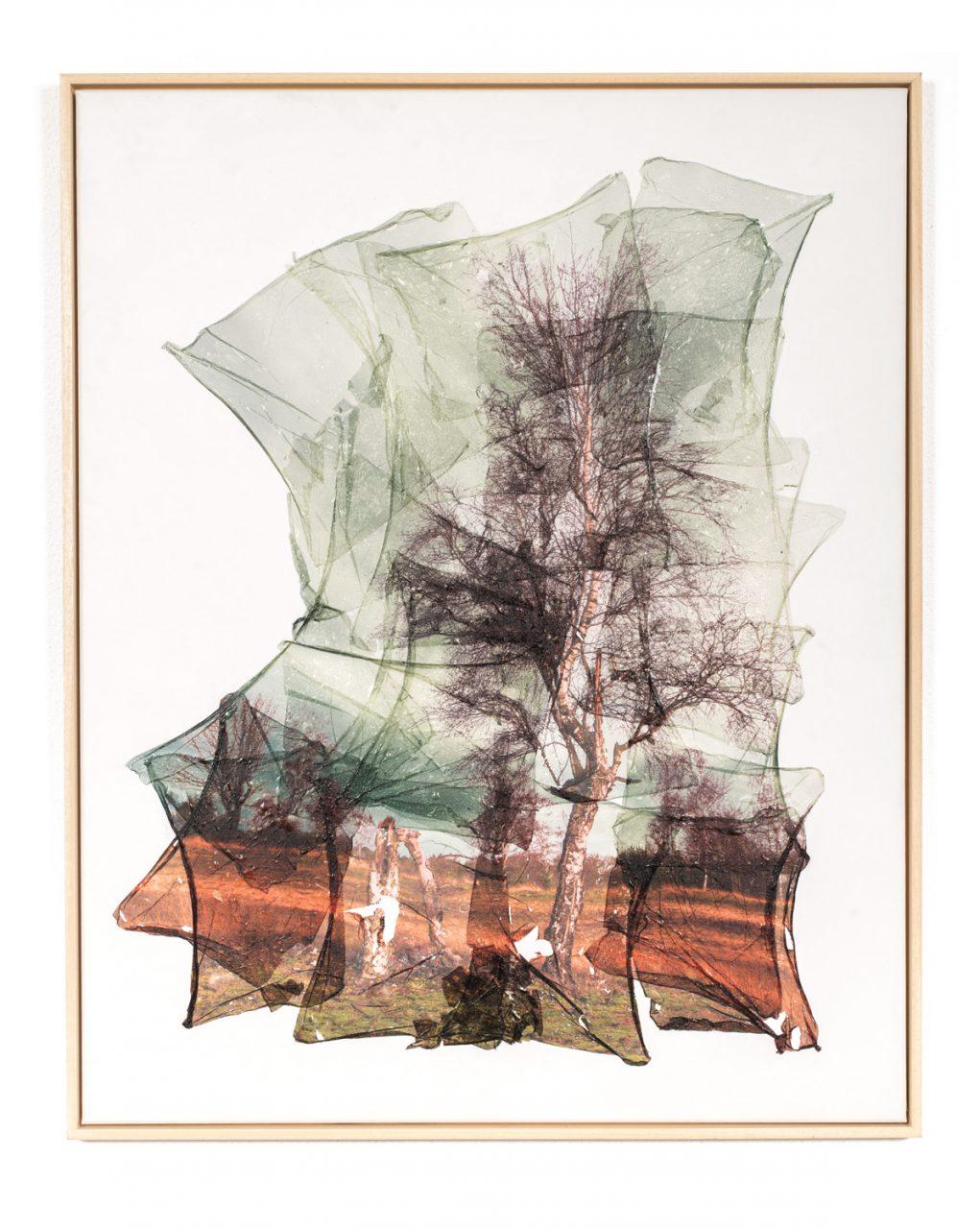 Miss Tree 2017 80 x 100 cm