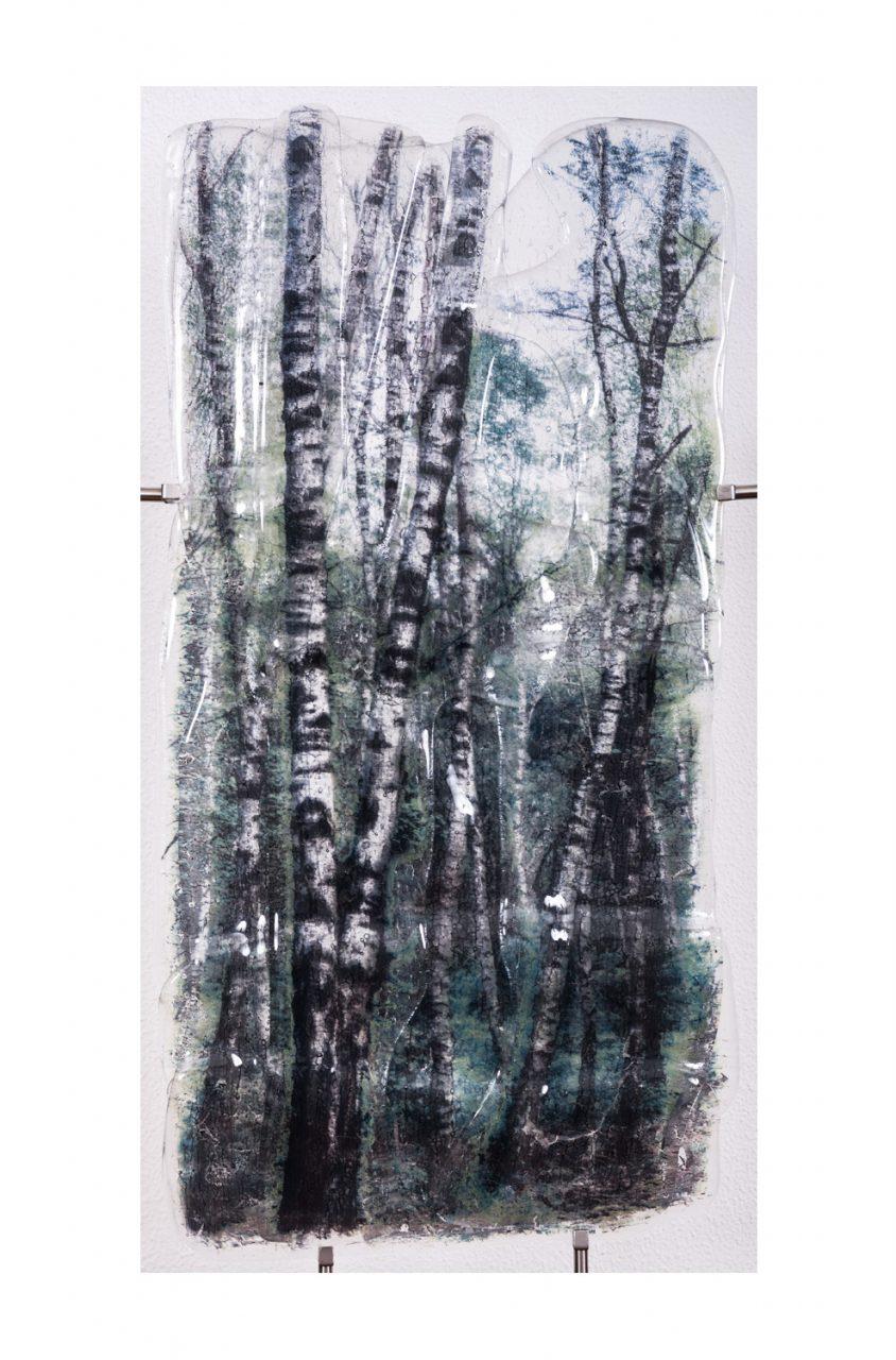 Blocked by Blue Birch 2017 40 x 75 cm