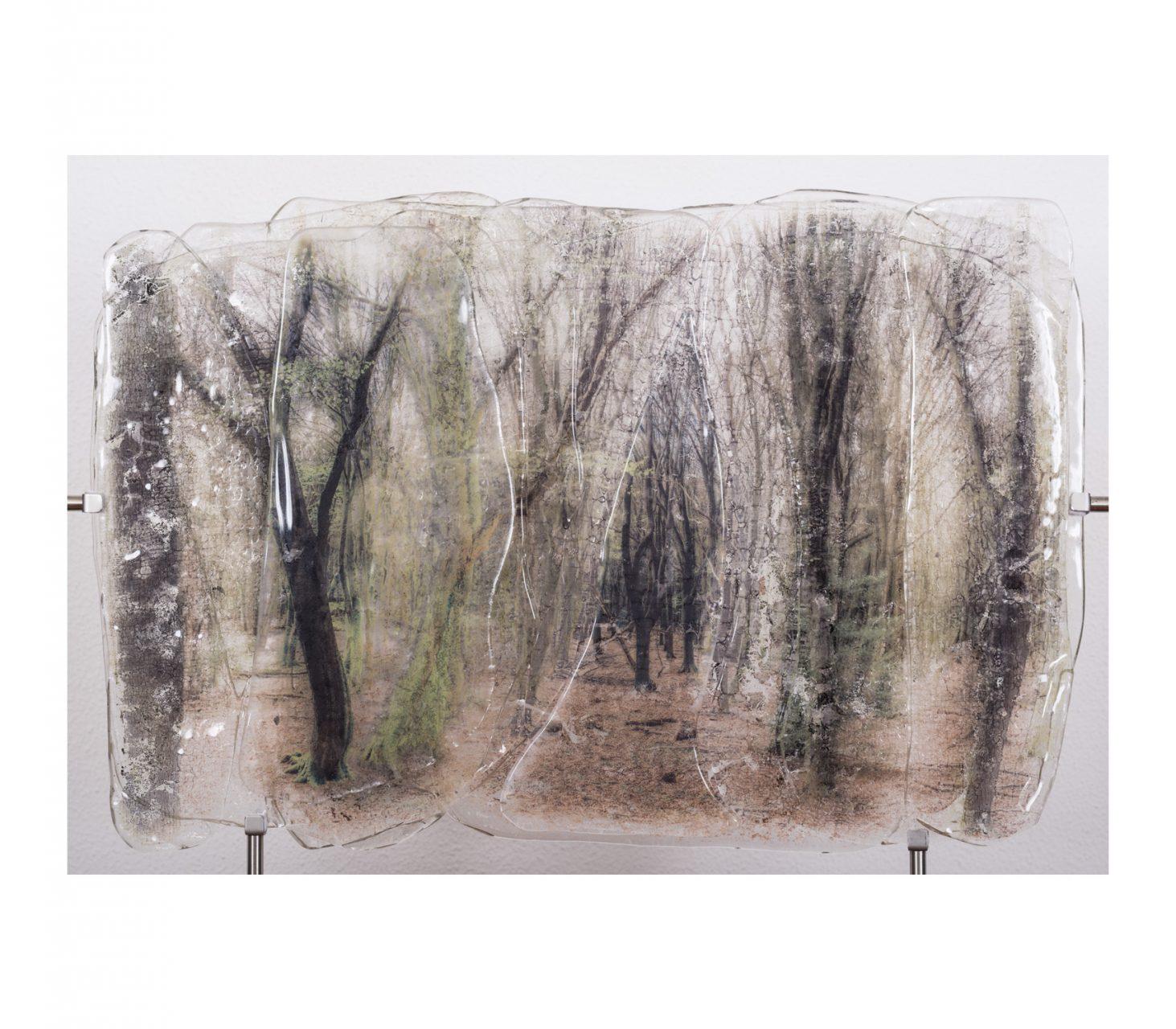 Through Trees 2017 60 x 40 cm